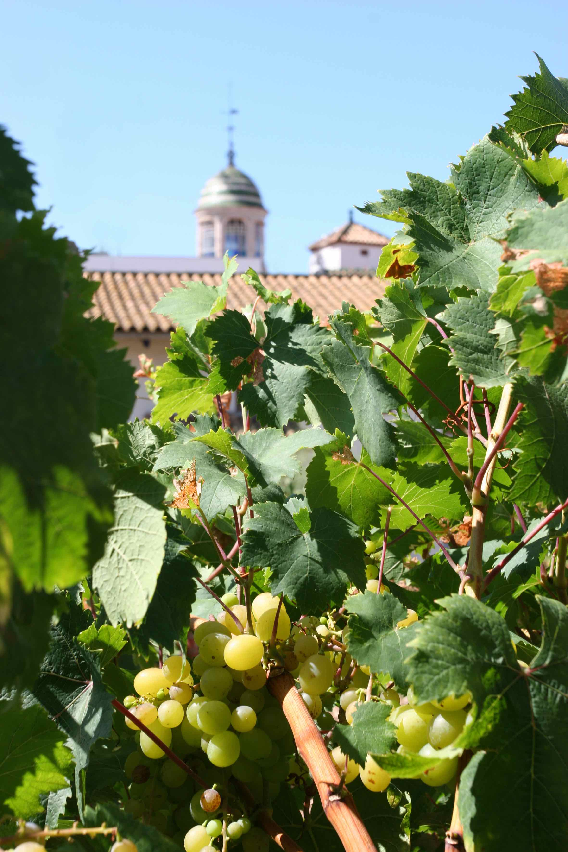 Vinyes de l'Hospital de Sant Joan de Sitges